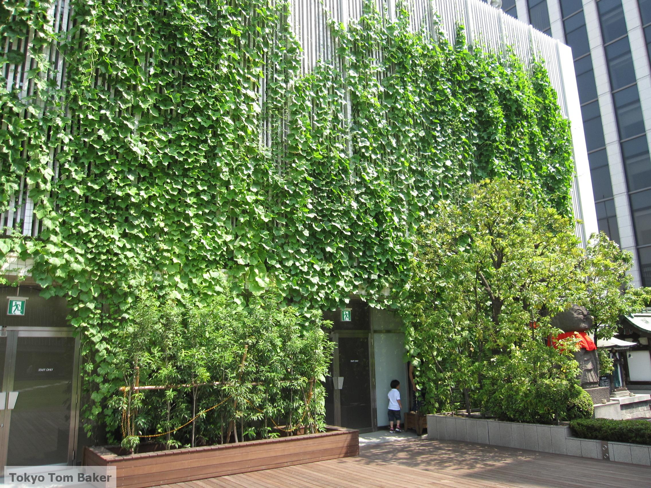 Green Curtain Tokyo Tom Baker The Blog