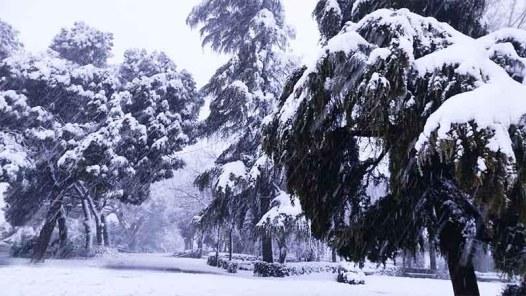 Parque de la Vega Toledo nevado