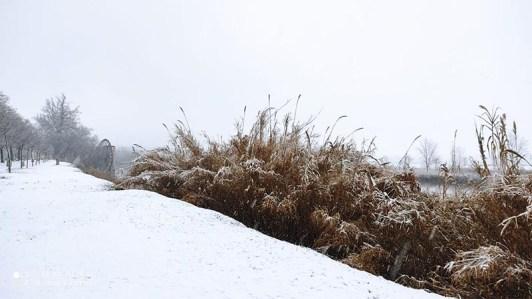 Parque de Safont Toledo Nevado
