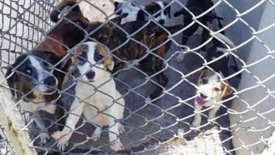 Photo of CAPA registra 59 animales abandonados y maltratados durante el mes de junio