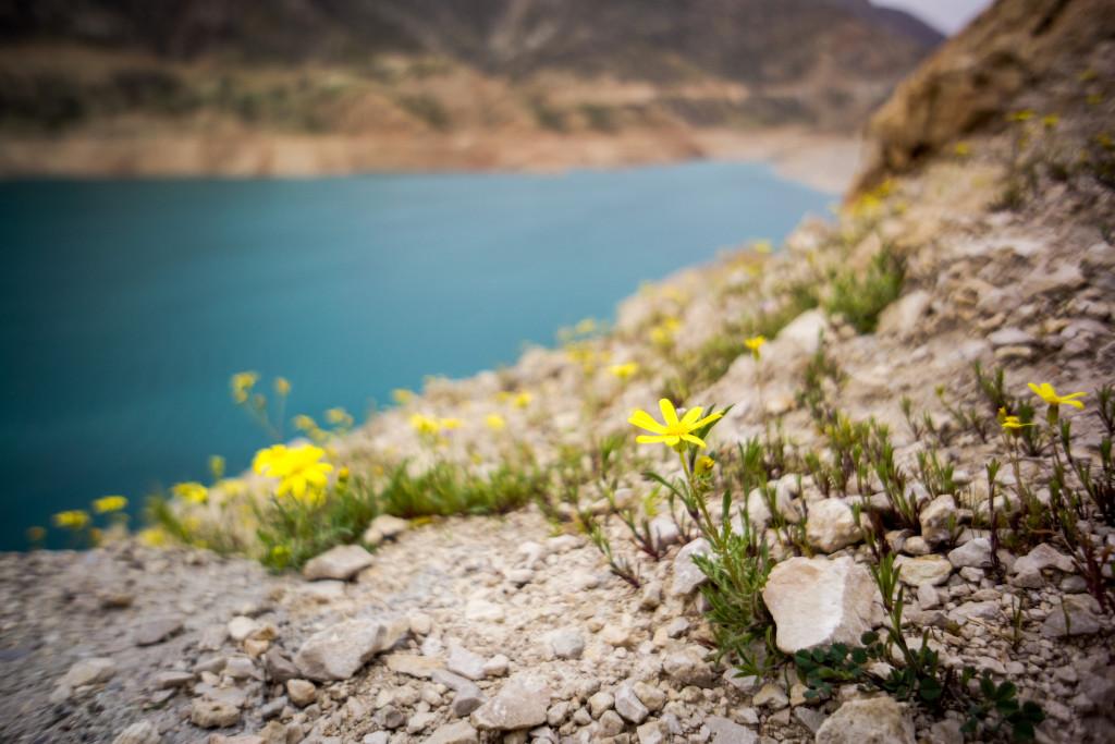 Spring flowers in Iran