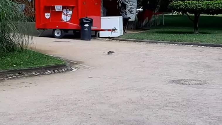 ratos varzea pequena Untitled