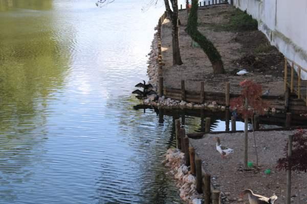 patos rio IMG 1835
