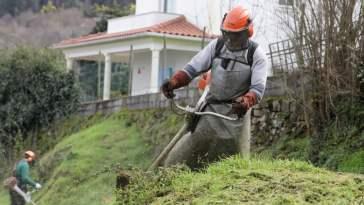 limpeza terrenos