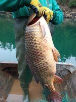 pesca peixe 8127_017444o
