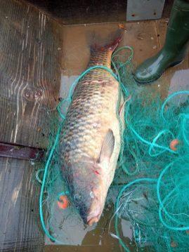 pesca peixe 8127_073145017444626_o