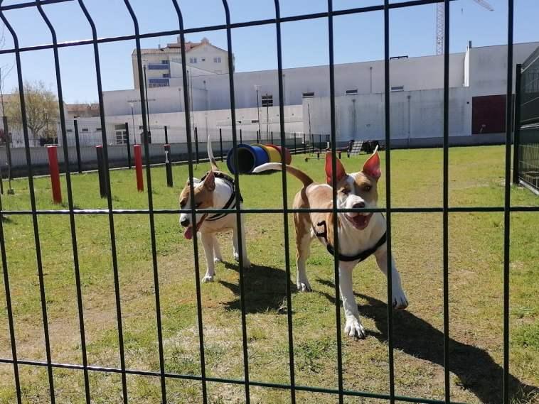 parque canino IMG 20210321 105351