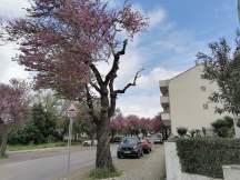 árvore bairro IMG_20210401_131713