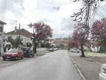 árvore bairro IMG_20210401_131913