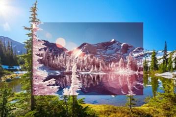 Vantage Peak Hemlock Revelation