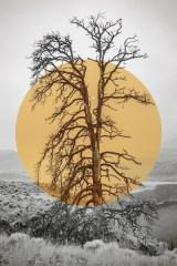 Thompson Dead Tree