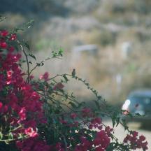 Hummingbird and Car