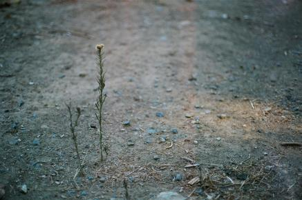 Lone Weed