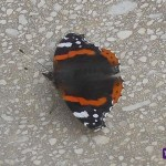 Mariposa #1
