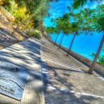 Parque La Ereta: Ladera de los olivos #Alicante