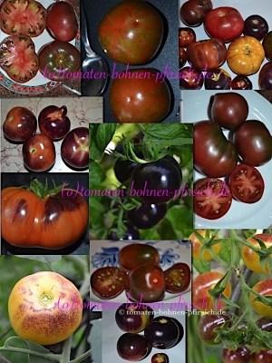 60 Tomatensamen von 12 verschiedenen schwarzen und blauen, blue Tomatensamensorten