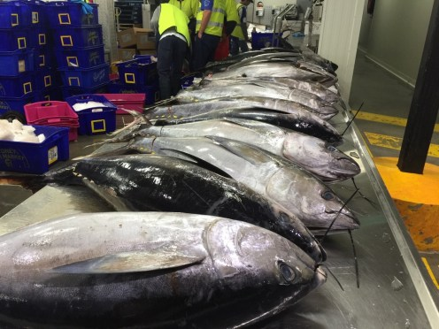 Melbourne-wholesale-fish-market-17