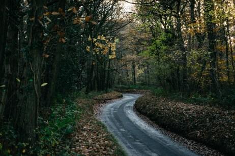 161118-haugh-woods-5