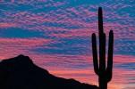 cactussun