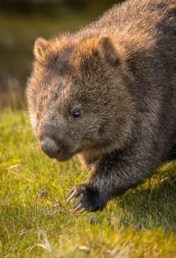 wombat72