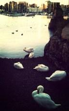 Barbican Swans.
