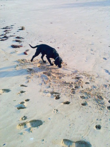 Lottie on the Beach.