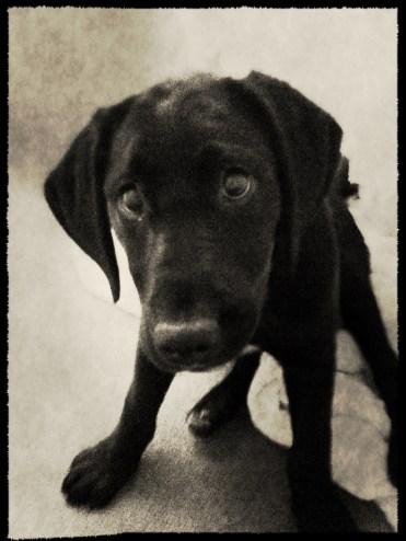 Lottie as a Pup.