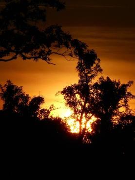 sunset 6-6-16 -9