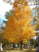 ithaca-cemetery-tree-colorfully-ascending-from-the-depths