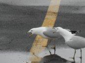 gulls speaking at E. Hill Plaza 3-21-15