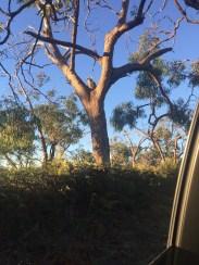 That is a koala...