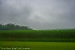 Rain on the window accentuates this Northern Virginia cornfield