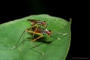 Some dancing, mating flies.