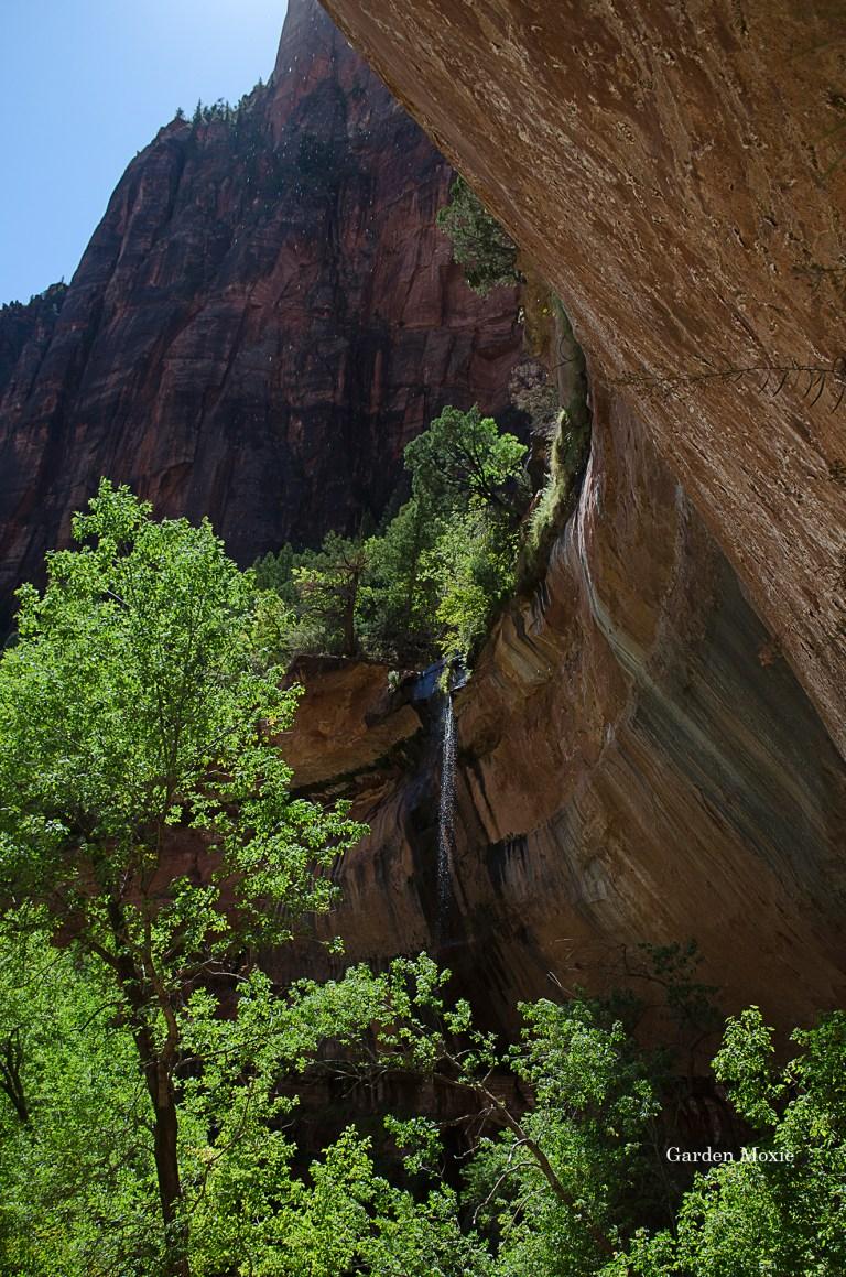 Garden Moxie   Mukuntuweap National Monument, Utah Photography   Tom Libertiny