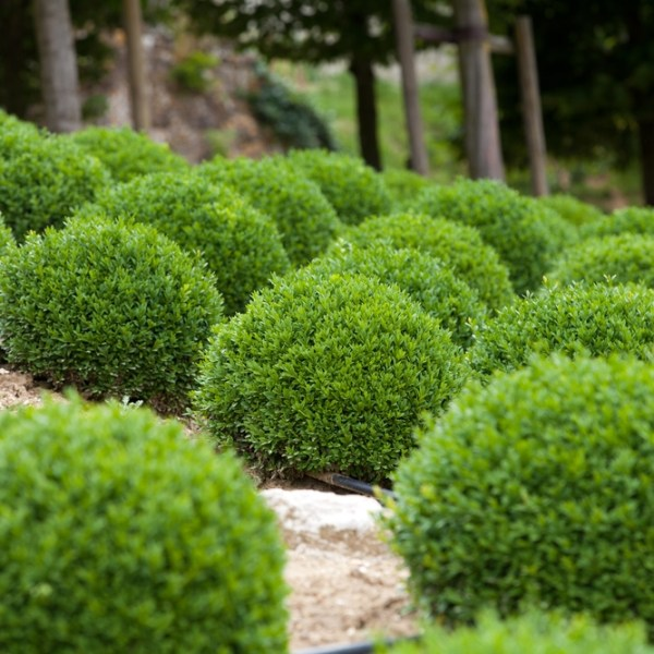 6 -maintenance landscaping shrubs