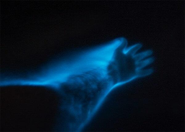 bioluminescence cayman