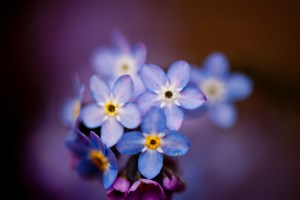 Forget me nots hypnosis