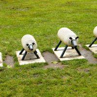 Irland: Überall Schafe!