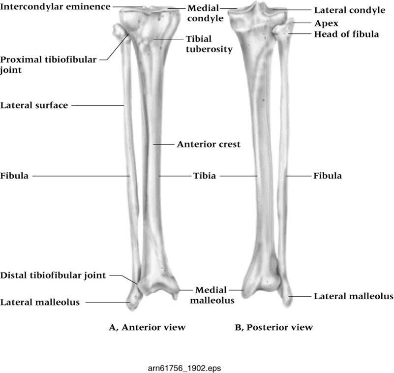 Ankle Sprain: REAL