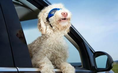 Positive Psychologie und Ridesharing – Mitfahrgelegenheit zum Glück