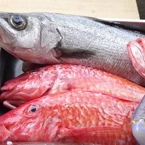 「フィオーレ ジャルディーノ」高知県の宿毛から直送される珍しい鮮魚
