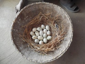 Nest Basket of Duck Eggs