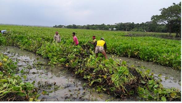 Bangladeshi Floating Garden