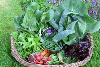 Veg in Basket