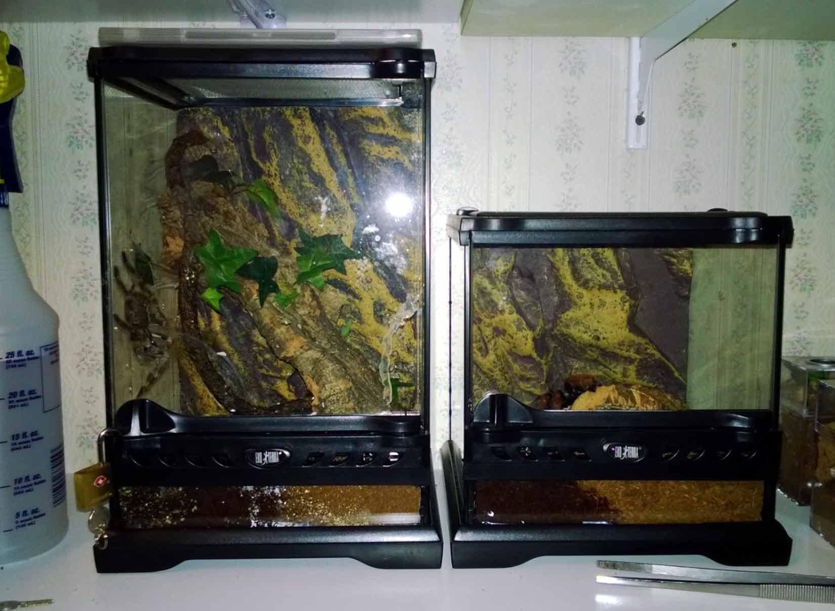 tarantula enclosures premium and