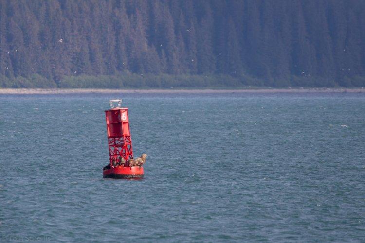Tom Scherlis Alaska-0838