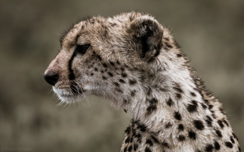 Tom Scherlis Tanzania-5475