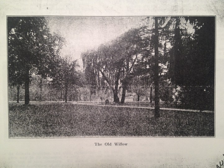 Old Willow on the Lawn.jpg