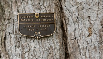 A Southern Magnolia tree bears an identification plaque to President Andrew Jackson, who planted the tree, at the White House in Washington Thursday, Oct. 15, 2009. Tens of thousands of people are expected to stream through the White House gates this weekend for a rare opportunity to see the fragrant roses, blue salvias and towering, decades-old trees that beautify the president's back yard. (AP Photo/Alex Brandon)