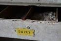 Dairy Drawer